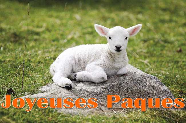 Agneau Pâques Image