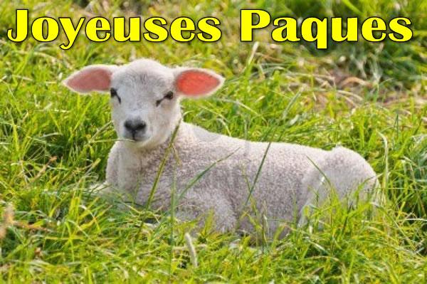 Image Agneau de Pâques