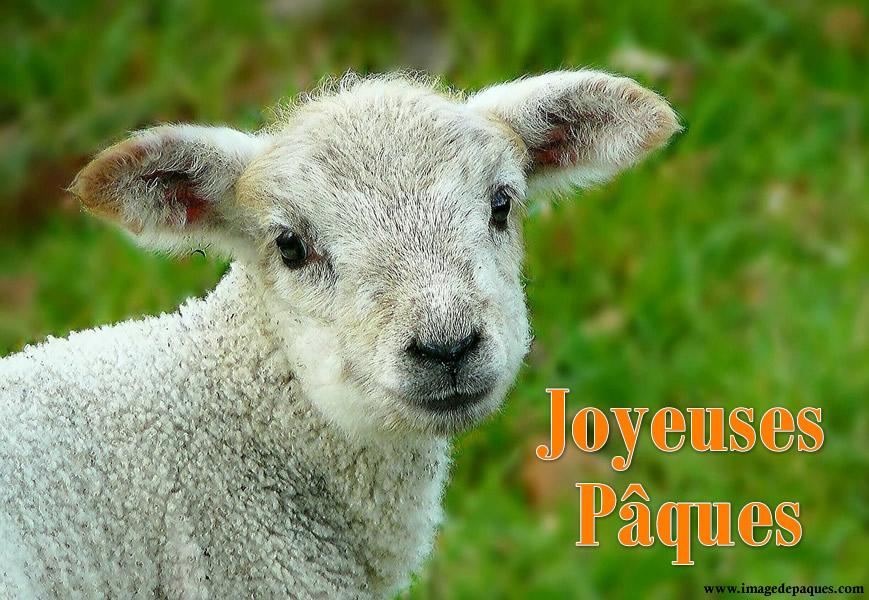 Images gratuites d'agneau