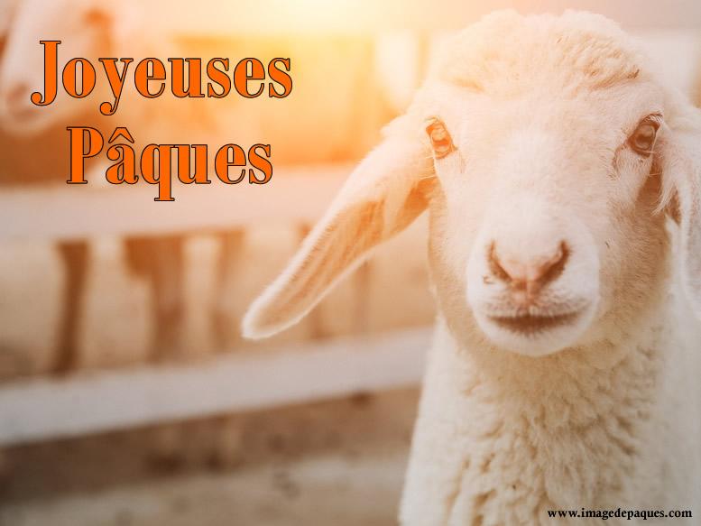 Images gratuites de agneau