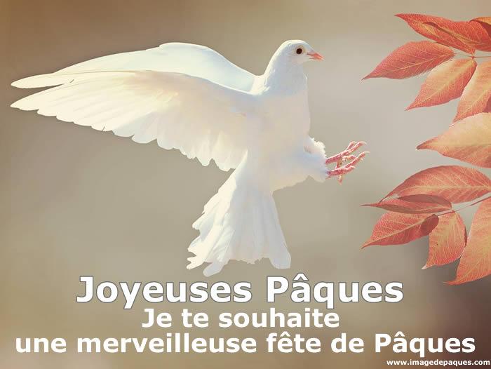Images gratuites Colombe Pâques