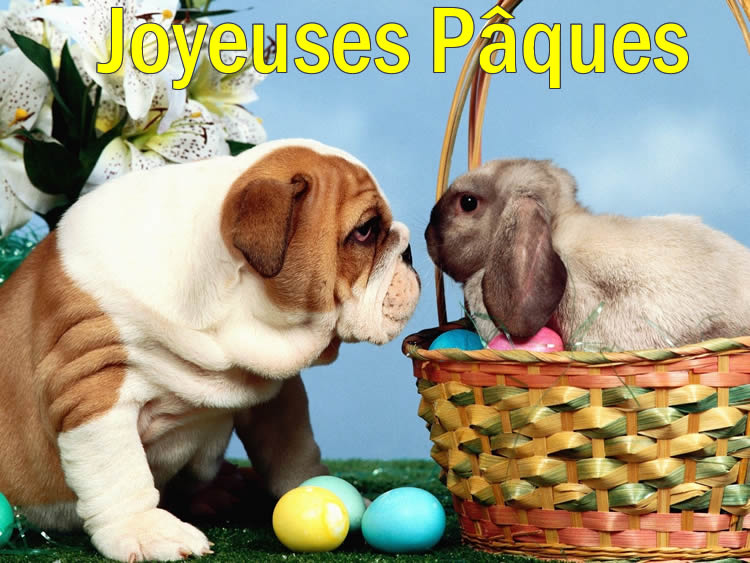 Image Lapin de Pâques