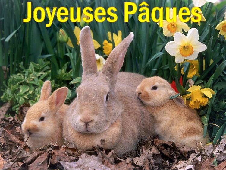 Image Lapin Pâques