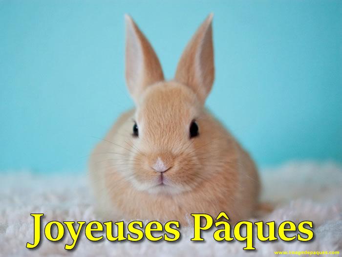Images Lapin de Pâques gratuites
