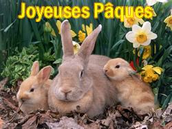 Image Lapin De Paques Belle Collection De Images Lapin De Paques