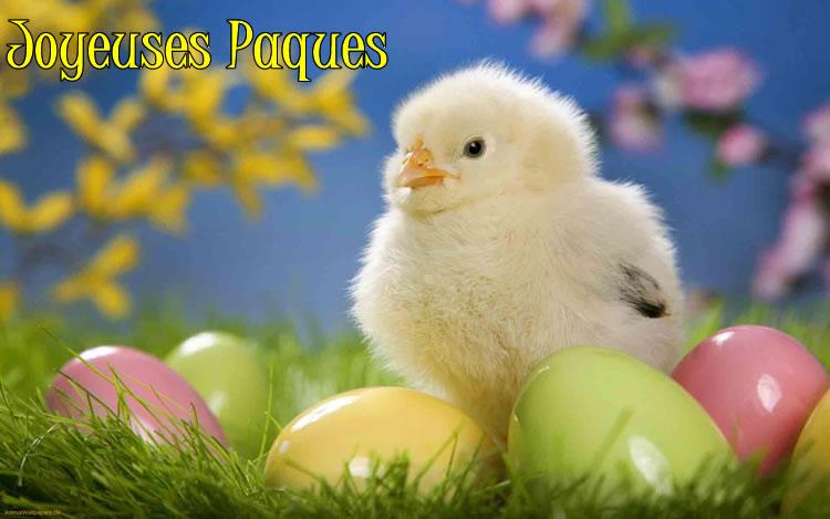Image Poussin de Pâques