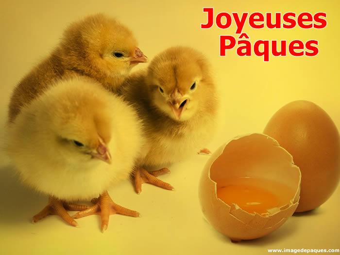 Images Gratuites Poussin de Pâques