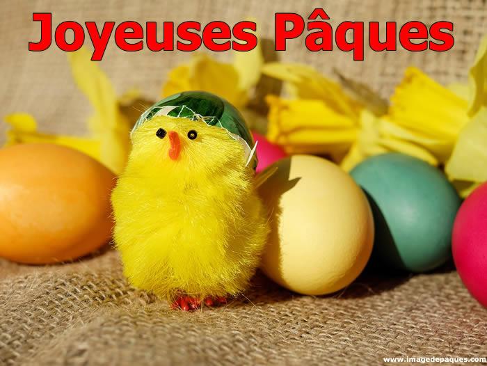 Images Gratuites Poussin Pâques
