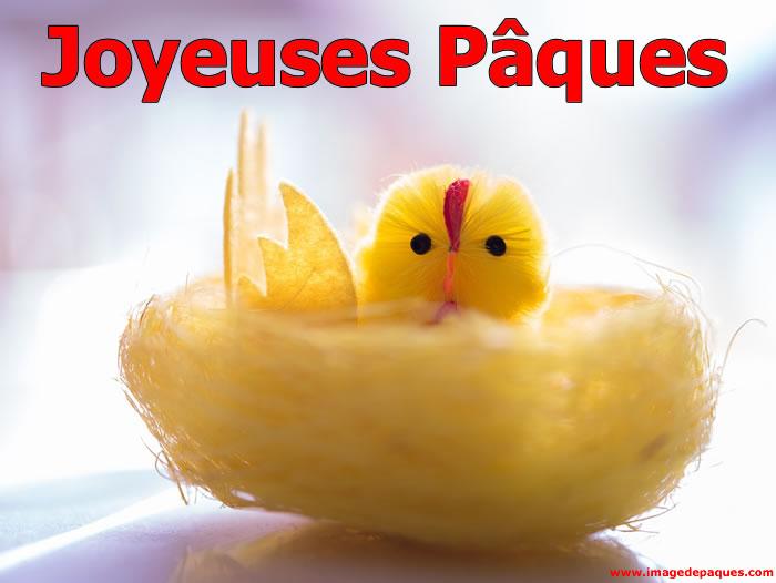 Plus belles images poussin de Pâques